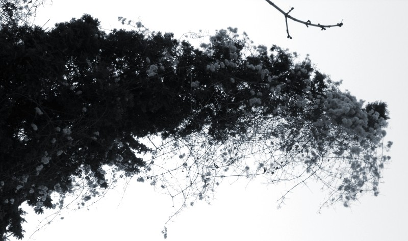 cotton_blue.jpg
