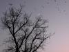 moon_birds.jpg
