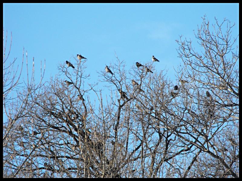 birds_.jpg