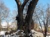 tree_.jpg